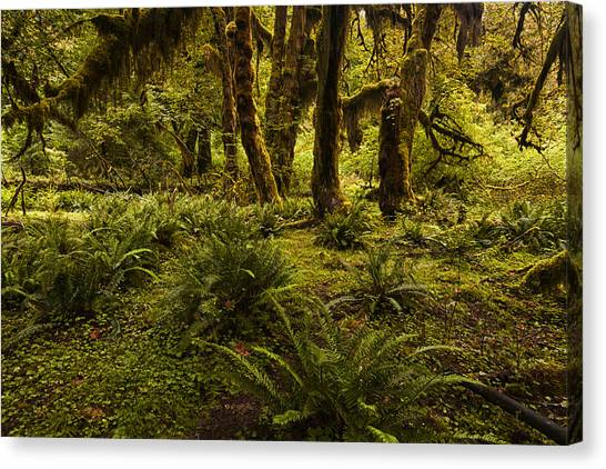 Olympic National Park Canvas Print - Enchantment by Mark Kiver