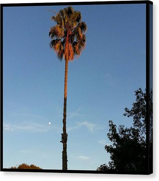 Palm Trees Sunsets Canvas Print - End Od Day Shot-- Courtesy Of Alondra by Kevin Previtali