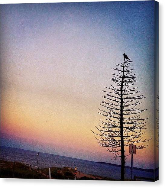Ravens Canvas Print - End Of Day #cronulla #cronullabeach by Robyn Padden