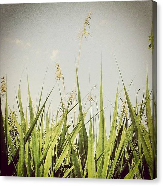 Jerseys Canvas Print - End Of June #grass #reeds #clouds by Red Jersey