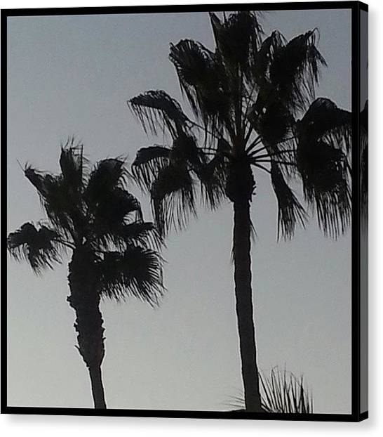 Palm Trees Sunsets Canvas Print - End Of The Day Courtesy Of Marina Del by Kevin Previtali