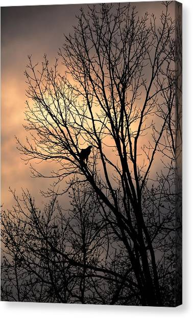 End Of The Day  Red Tailed Hawk Canvas Print