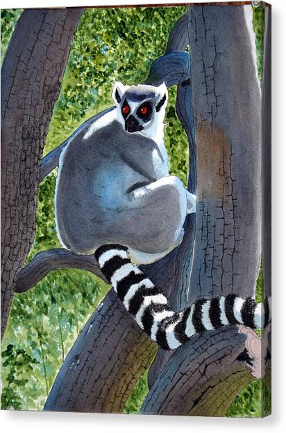 Ring-tailed Lemur Canvas Print - Endangered Ringed Tail Lemur by Mike Robles