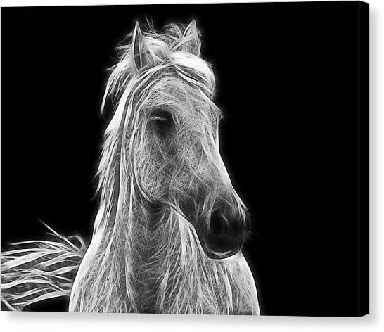 Hanoverian Canvas Print - Energetic White Horse by Joachim G Pinkawa