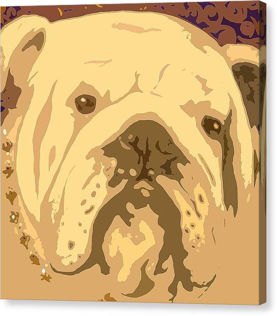 English Bully Canvas Print