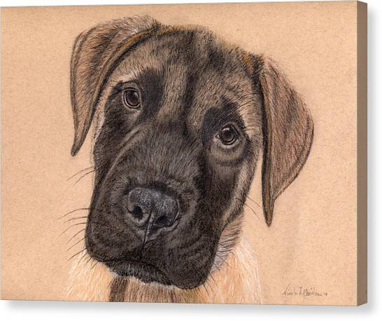 English Mastiff Puppy Canvas Print by Nicole I Hamilton