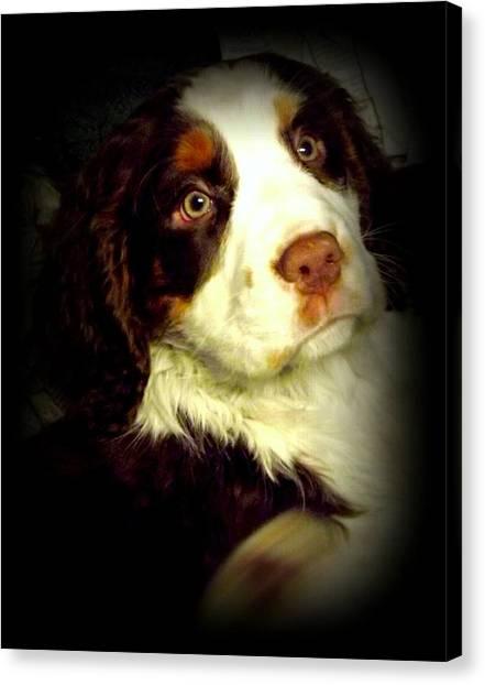 English Springer Spaniel Canvas Print by Dancingfire Brenda Morrell