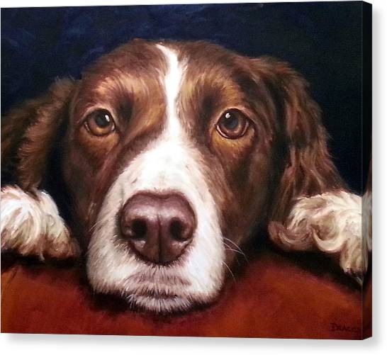 Springer Spaniel Canvas Print - English Springer Spaniel Resting On Dark Red by Dottie Dracos