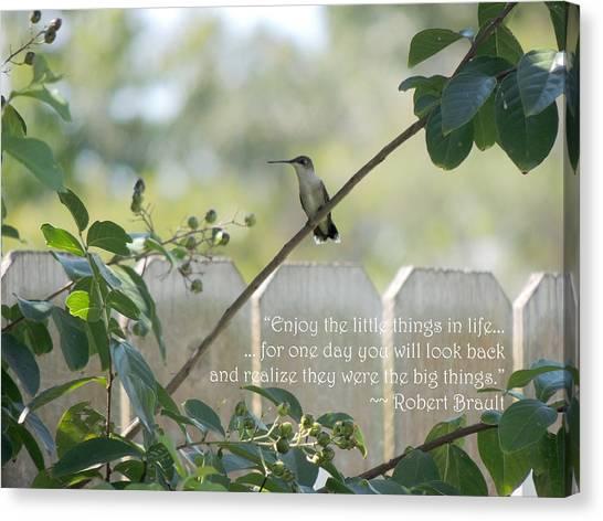 Hummingbird On Crepe Myrtle Canvas Print