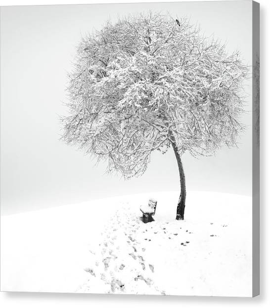 Frost Canvas Print - Enjoy The Silence by Sherry Akrami