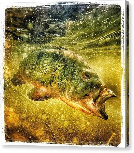 Bass Fishing Canvas Print - Enjoyed Taking This Picture by Miguel Chinea