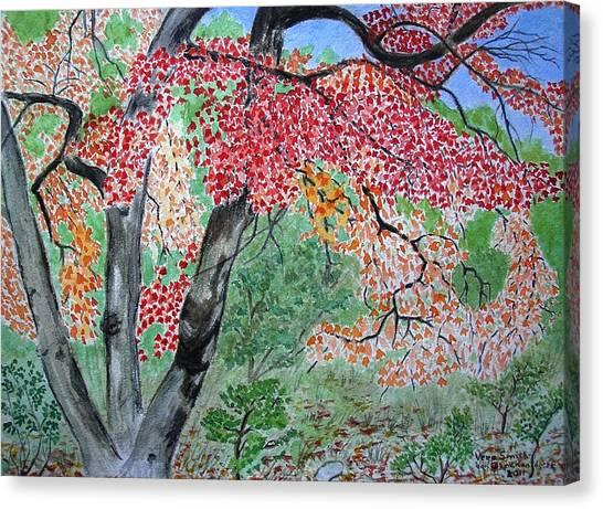 Enjoying Lost Maples Canvas Print
