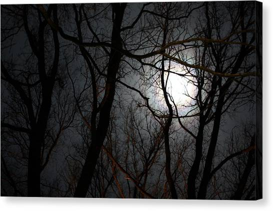 Entangled In The Moonlight Canvas Print by Judy Powell