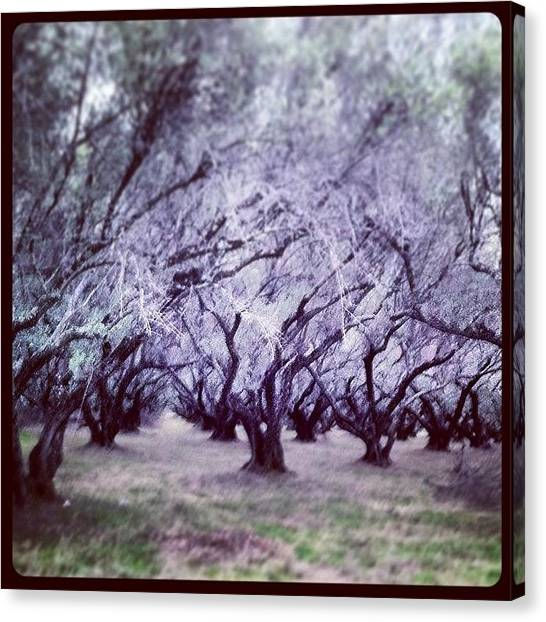 Orchard Canvas Print - Enter The Murkwood! Mucking About This by Brian Taylor