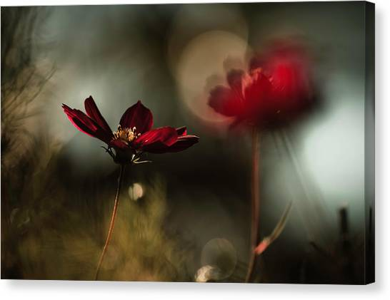 Romantic Flower Canvas Print - Entre Mysta?re Et Passion by Fabien Bravin