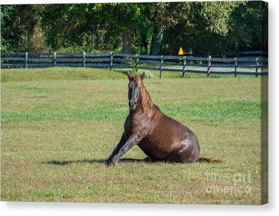 Canvas Print - Equestrian Rollick by Charles Kraus