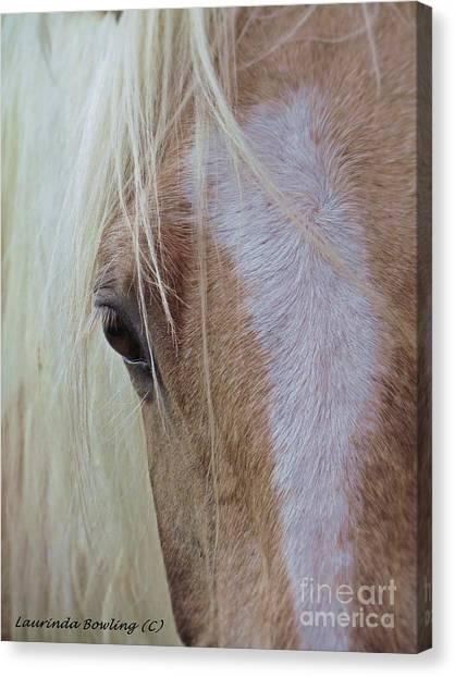 Equine Head Study Canvas Print