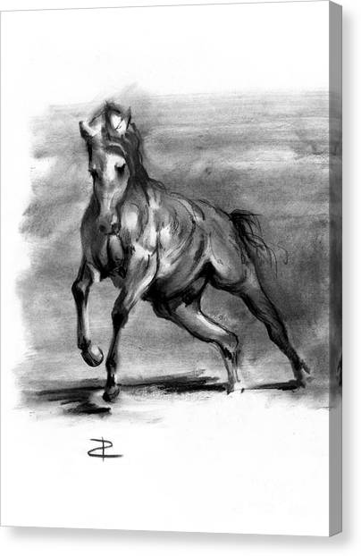 Equine IIi Canvas Print