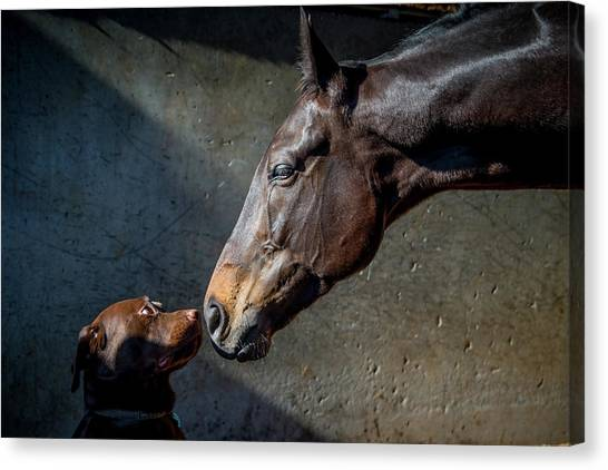 Thoroughbreds Canvas Print - Equine Meets Canine by Sharon Lee Chapman