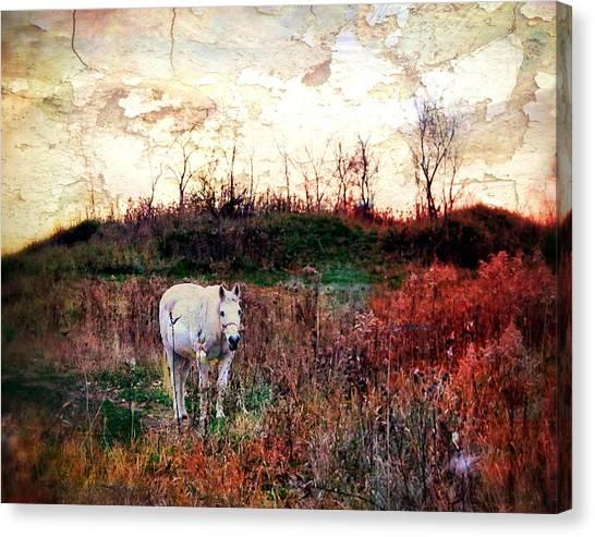 Equine Stare Canvas Print