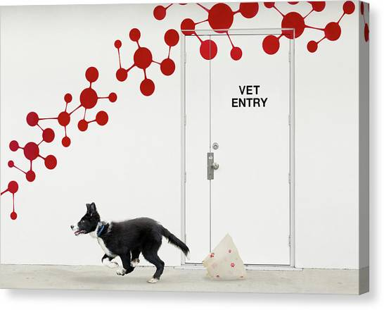 Puppies Canvas Print - Escape At The Vet by Jacqueline Hammer