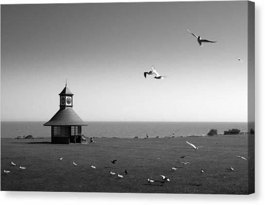 Esplended Gulls Canvas Print