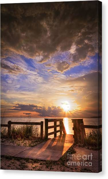Tampa Bay Rays Canvas Print - Essence Of Light by Marvin Spates