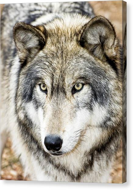 Essence Of Wolf Canvas Print