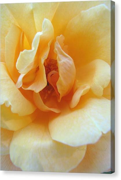 Lightness Of Being - Yellow Rose Macro -floral Art From The Garden Canvas Print