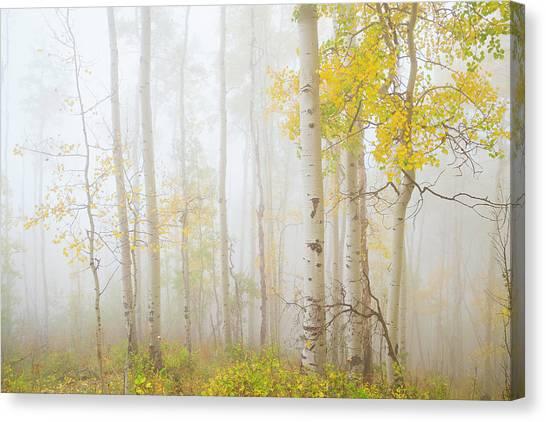 Ethereal Autumn Aspens In Fog Canvas Print