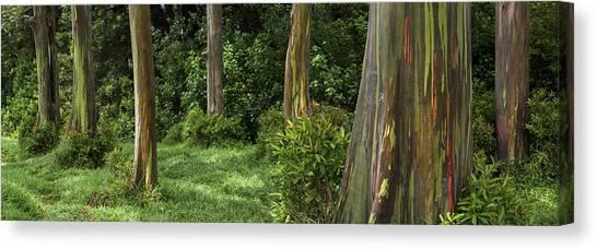 Eucalyptus Dream Canvas Print