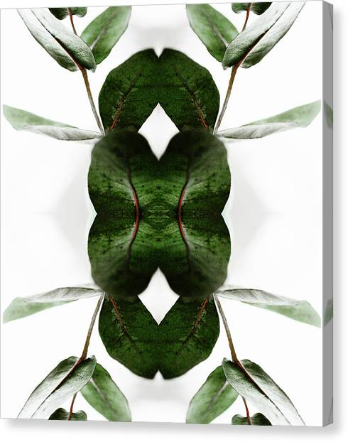 Eucalyptus Leaves Canvas Print