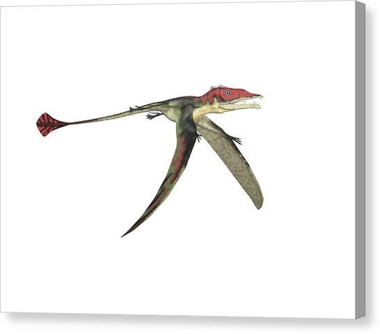 Pterodactyls Canvas Print - Eudimorphodon Pterosaur by Friedrich Saurer