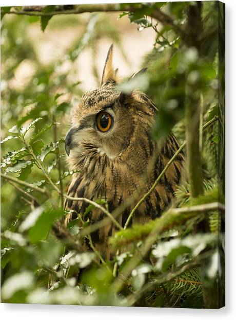 Eurasian Eagle-owl 2 Canvas Print