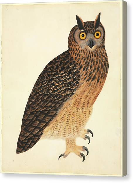 Accipitridae Canvas Print - Eurasian Eagle-owl by Natural History Museum, London
