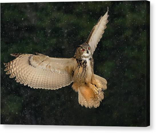 Ontario Canvas Print - Eurasian Eagle Owl by Susan Breau