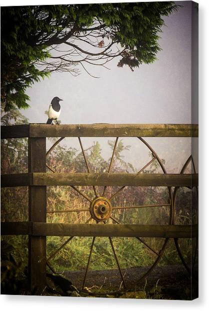 Eurasian Magpie In Morning Mist Canvas Print