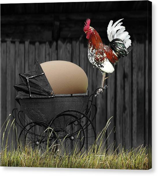 Chicken Farms Canvas Print - ...even Prouder Than A Peacock! by Fran??ois Josse