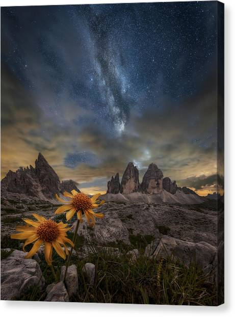 Even The Flowers Seem To Be Fascinated By The Stars Canvas Print by Alberto Ghizzi Panizza