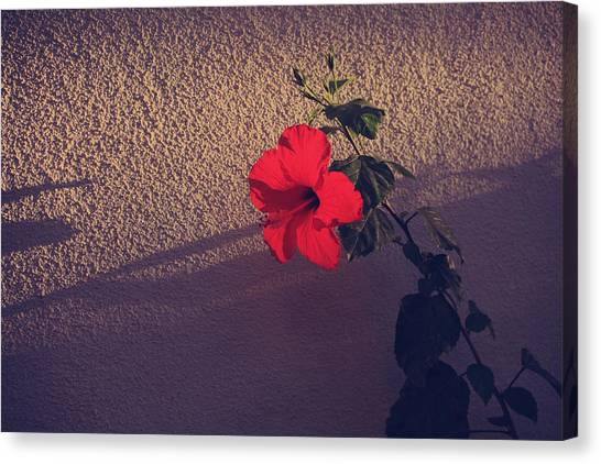 Hibiscus Canvas Print - Evening Comes Softly by Laurie Search