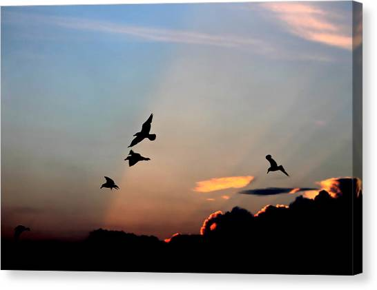 Evening Dance In The Sky Canvas Print