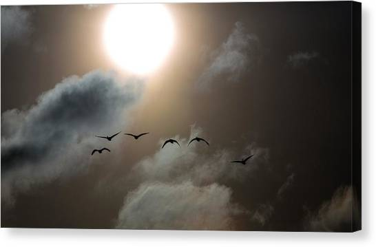 Evening Flight Canvas Print