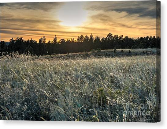 Evening Grasses In The Black Hills Canvas Print