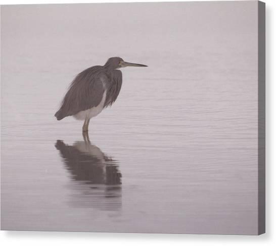 Evening Heron Canvas Print