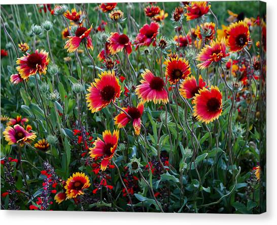 Evening In Bloom Canvas Print