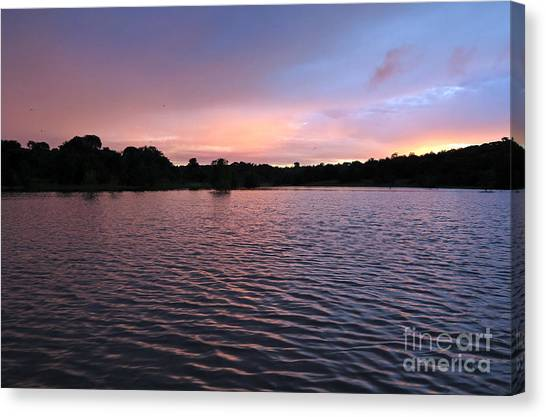 Amazon River Canvas Print - Evening Light Amazon River by Bob Christopher
