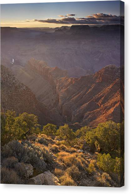 Evening Light At The Grand Canyon Canvas Print