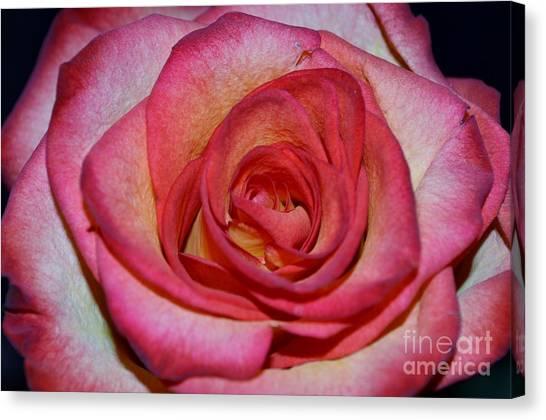 Event Rose Canvas Print