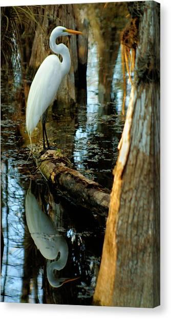 Everglades Egret Canvas Print