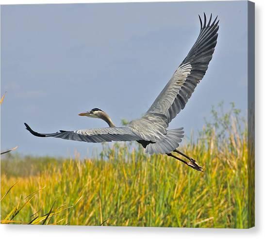 Everglades Flight Canvas Print